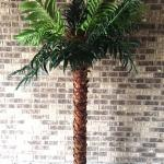 palm tree. luau. tropical party. palm tree rental.