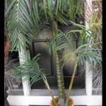 palm tree. luau party. jungle.